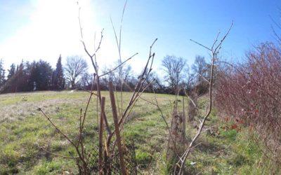 Lancement de la saison de plantation 2018/2019